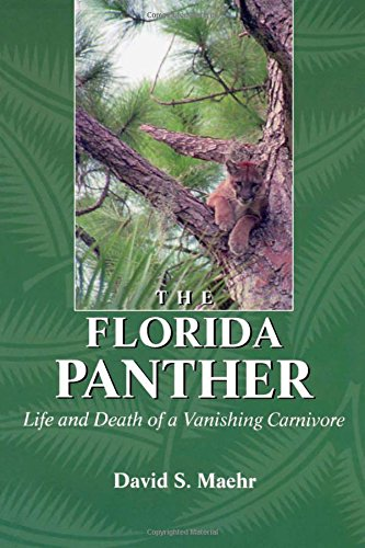 The Florida Panther: Life And Death Of A Vanishing Carnivore - David Maehr