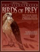 The Illustrated Birds of Prey: Red-Tailed Hawk, American Kestrel & Peregrine Falcon: The Ultimate Reference Guide for Bird Lovers, Woodcarvers, and Ar
