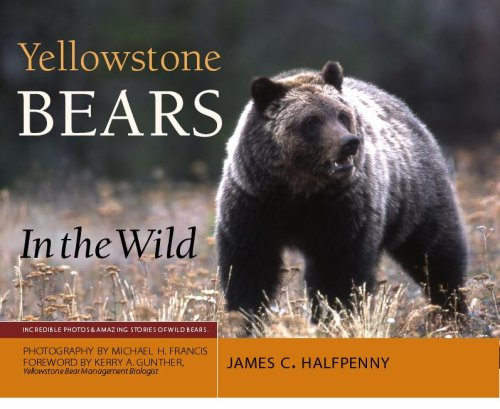 Yellowstone Bears in the Wild - James C. Halfpenny; PhD; Photography by Michael H Francis