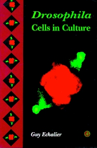 Drosophila Cells in Culture