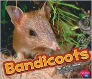 Bandicoot - Lyn A. Sirota