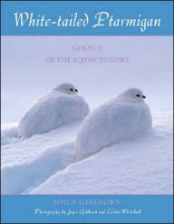 White-Tailed Ptarmigan: Ghosts of the Alpine Tundra - Joyce Gellhorn
