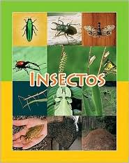 Insectos (Insects) - Amy White
