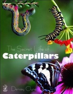 The Secret Life of Caterpillars - Clyne, Densey