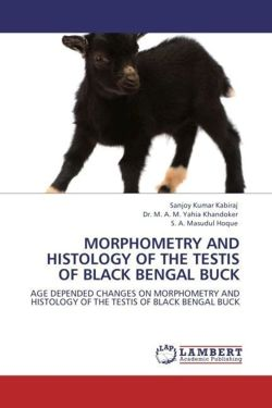 MORPHOMETRY AND HISTOLOGY OF THE TESTIS OF BLACK BENGAL BUCK