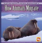 How Animals Migrate - Labella, Susan