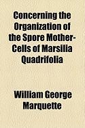 Concerning the Organization of the Spore Mother-Cells of Marsilia Quadrifolia - Marquette, William George