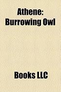 Athene: Burrowing Owl