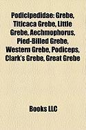 Podicipedidae: Grebe