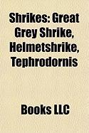 Shrikes: Great Grey Shrike