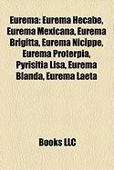 Eurema: Eurema Hecabe, Eurema Mexicana, Eurema Brigitta, Eurema Nicippe, Eurema Proterpia, Pyrisitia Lisa, Eurema Blanda, Eure