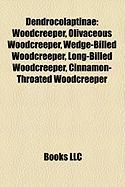 Dendrocolaptinae: Woodcreeper, Olivaceous Woodcreeper, Wedge-Billed Woodcreeper, Long-Billed Woodcreeper, Cinnamon-Throated Woodcreeper