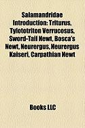 Salamandridae Introduction: Triturus, Tylototriton Verrucosus, Sword-Tail Newt, Bosca's Newt, Neurergus, Neurergus Kaiseri, Carpathian Newt
