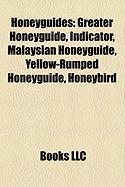 Honeyguides: Greater Honeyguide, Indicator, Malaysian Honeyguide, Yellow-Rumped Honeyguide, Honeybird