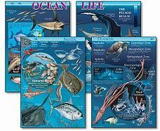 Ocean Life - Mark Twain Media