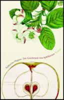Der Geschmack von Apfelkernen
