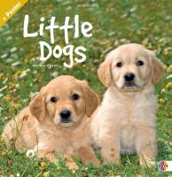 Little Dogs Broschurkalender 2012