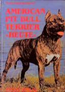 American Pit Bull Terrier heute