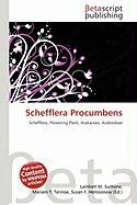Schefflera Procumbens