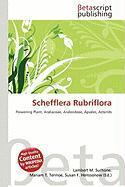 Schefflera Rubriflora