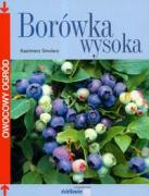 Borowka wysoka - Smolarz, Kazimierz