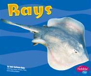 Rays - Rake, Jody Sullivan