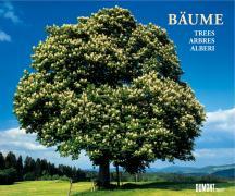 Bäume 2007